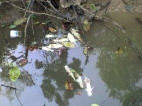 Mortandade de peixes