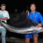 sailfish - fernando de noronha