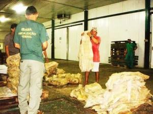 Ibama apreende 3,5 toneladas de pirarucu salgado em Marituba, Pará